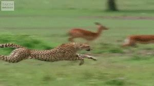 watching these animals move in super slow mo will make you