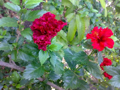 Types Of Flowering Plants Thin Blog Types Of Garden Plants And Flowers