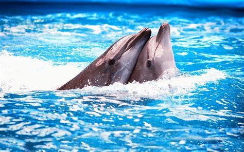 imagenes para fondo de pantalla delfines animales delfines fondos de pantalla gratis