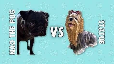 pugs vs new pugs pug vs statue nao the pug