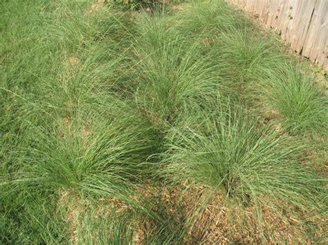 images of love grass gauteng fauna and flora guiding sa