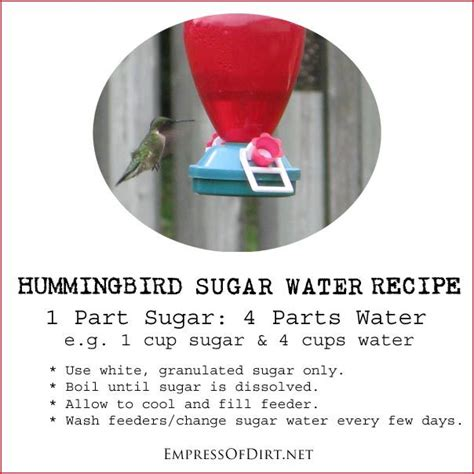 17 best ideas about hummingbird sugar water on pinterest