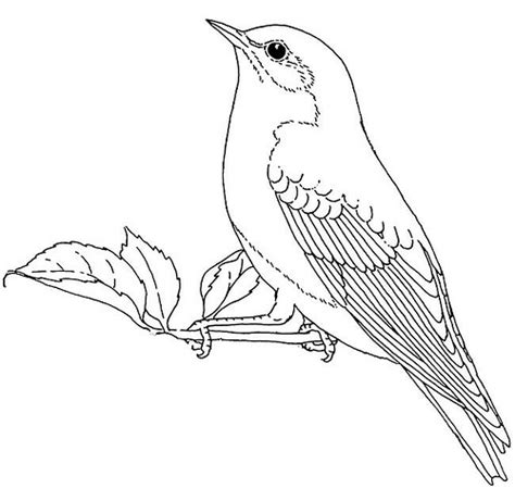 Bluebird Colouring Pages Bluebird Coloring Page