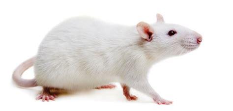 Jasa Pembasmi Tikus Robelias Dibalik Jubah Kita Ada Banyak Hal Yang Bisa