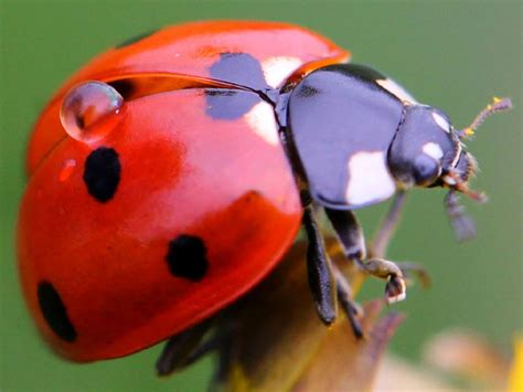 backyard insects fascinating bug facts hgtv