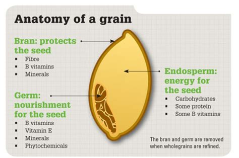 whole grains digestive system grains for your brain food as medicine