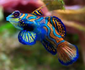 top 10 most beautiful and colorful fish free talk