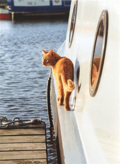 living on a canal boat with cats 17 best images about narrowboat exterior ideas on