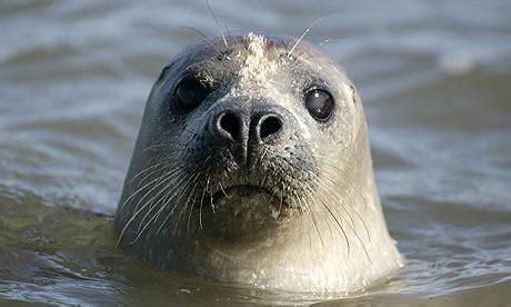Sea Ls by Seals