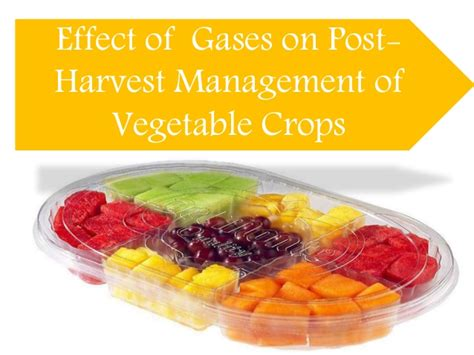 Modified Atmosphere Packaging And Freezing by Modified Atmosphere Packaging In Vegetables
