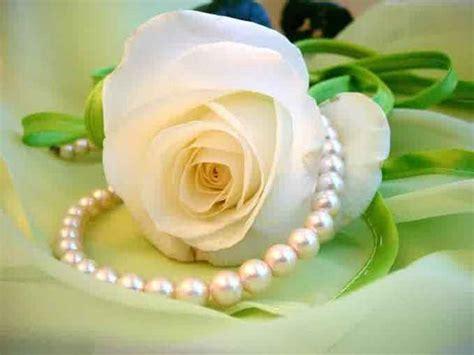 Bunga Mawar Alam Indah gambar bunga mawar putih yang indah pernik dunia