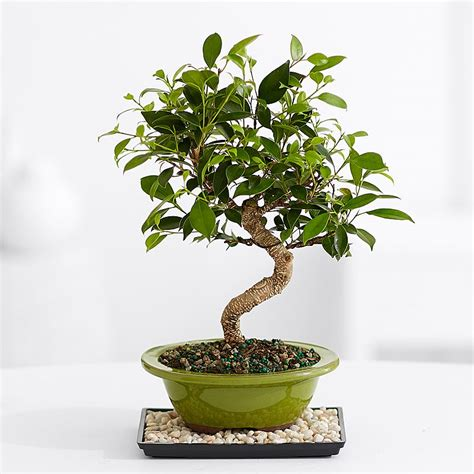 live indoor plants office plants top live indoor plants