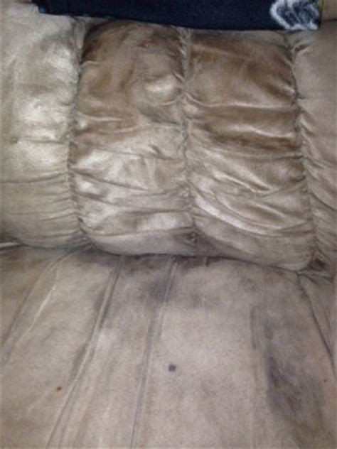 remove urine smell from couch removing urine odors from a couch thriftyfun