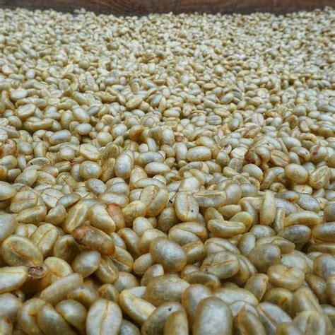 Coffee Bean Bandung 25 best palintang microlot coffee images on the coffee bandung and cherries