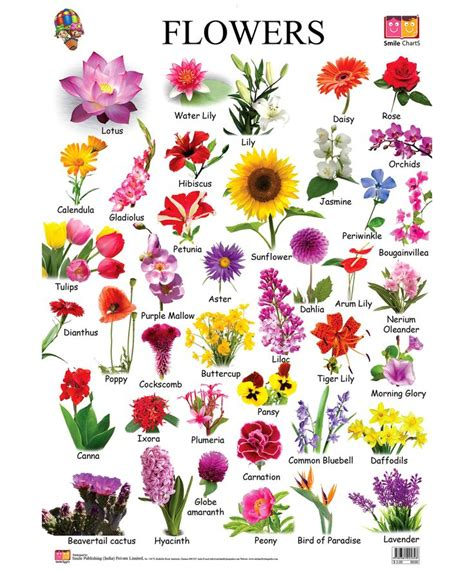 163 beautiful types of flowers a to z with pictures flower chart chart and flower