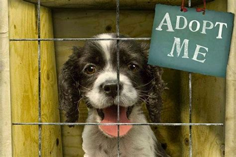 animal rights how are animals are treated in animal shelters