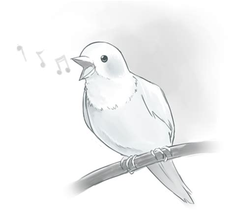 song bird science