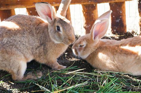 imagenes animales granja granja animals a santa pau activitats a la garrotxa