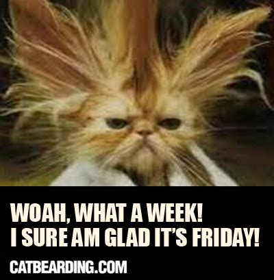 Friday Cat Meme - happy friday cat memes image memes at relatably com