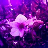 pictures  exotic fruits grow lights  plants
