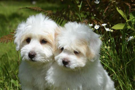 40 great dogs photos 183 pexels 183 free stock photos