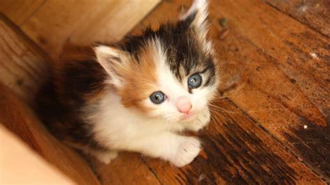alimentazione gatto cucciolo cuccioli di e gatto archives