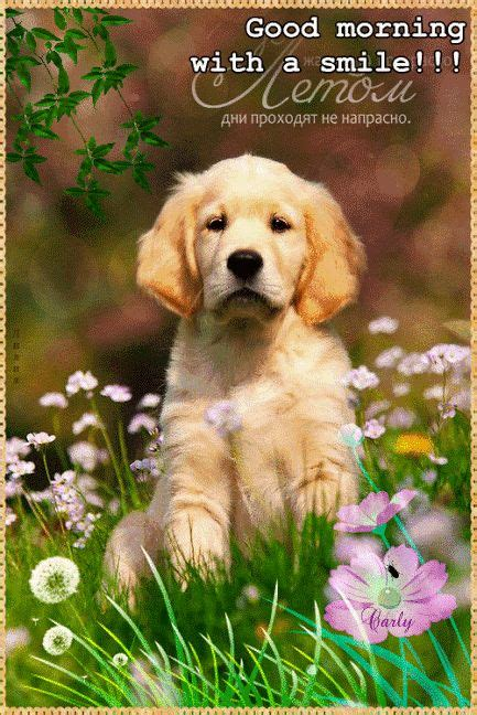 by good morning golden retriever 1000 images about good morning animated on pinterest