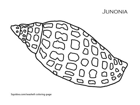 queen conch coloring page bucket coloring page the queen or pink conch shell