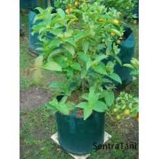 Harga Planter Bag 100 Liter perlengkapan pertanian