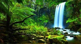 Bedroom Definition Oregon La Salvaguardia Dell Ambiente Naturale Brasiliano