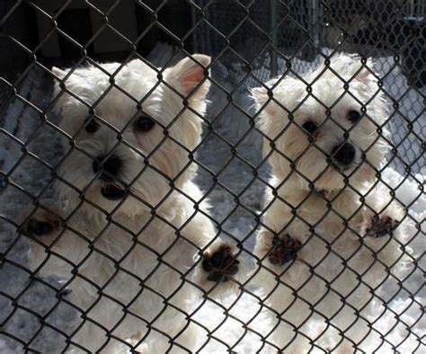 boarding rates northwind kennels boarding rates northwind kennels bedford ny