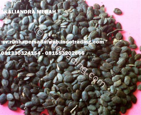 Bibit Jamur Tiram Mojokerto jual bibit tanaman kaliandra merah harga murah mojokerto