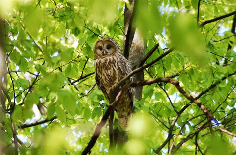 Penghapus Bentuk Burung Owl T1704001 walet burung hantu dunia walet