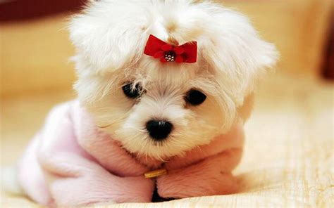 cutest puppies dogs wallpaper