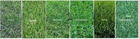 Types Of Grass by A Green Yard In Fl Hb Living On The