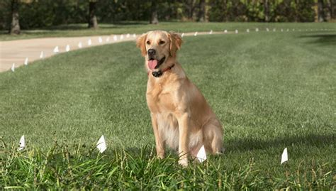 electric fences for dogs why responsible breeders are using electric fences