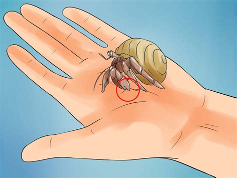the best ways to care for hermit crabs wikihow