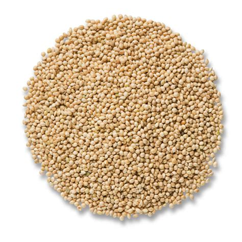 duncraft com cole s white millet bird seed