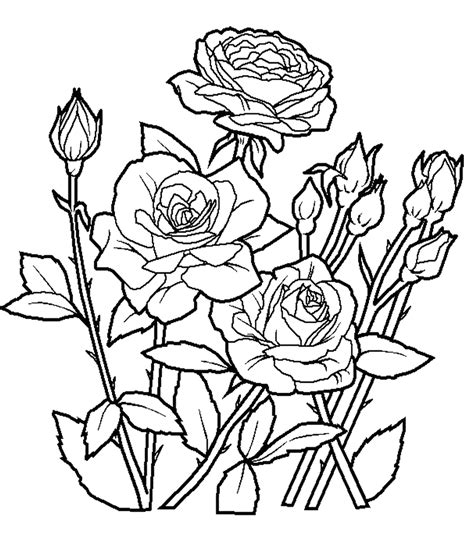 coloring pages of flowers and gardens flower coloring worksheet flowers garden seeds trees