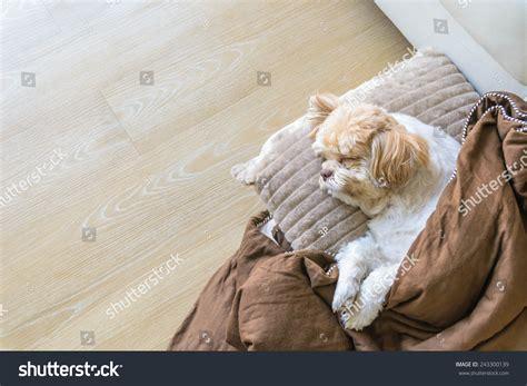 how to sleep comfortably on the floor dog sleeping comfortably on the floor in the living room