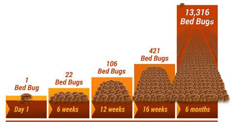 does heat kill bed bugs denver how do you get bed bugs removed disposed