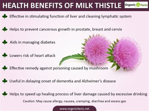 How Should I Take Milk Thistle To Detox Liver by 14 Impressive Benefits Of Milk Thistle Organic Facts