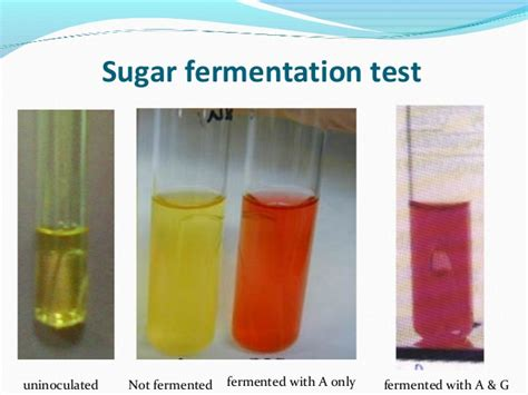 glucose test tube glucose test tube biochemical reaction prac microbiology