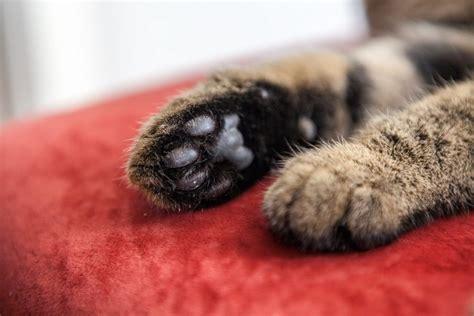 grown toenails  pets petfocus eastern shore