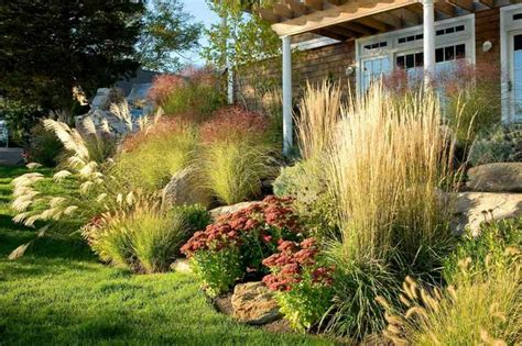 ornamental grasses garden design landscaping pinterest