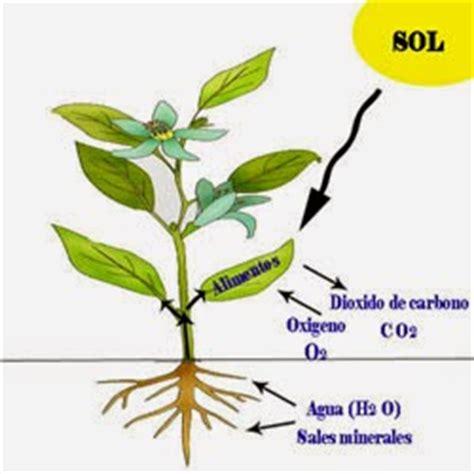 fotosintesis de las plantas fotosintesis de las plantas pictures to pin on pinterest