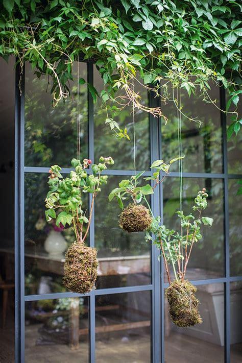 giardini interni giardini interni idee e ispirazioni per un giardino