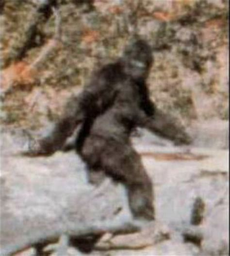 Bigfoot Search A Real Paranormal Anomaly What Is It