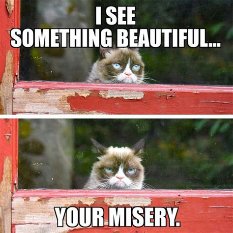 How To Make A Grumpy Cat Meme - 16 of the best grumpy cat memes catster