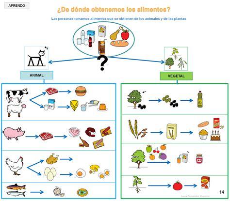 maqueta primer grado de los alimentos origen animal y vegetal proyecto quot los alimentos quot buscamos observamos